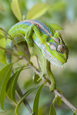 Chameleon-Bursary